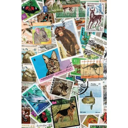 Postcard #858
